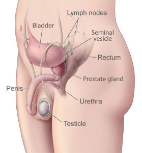 prostate-illustration-enlarge