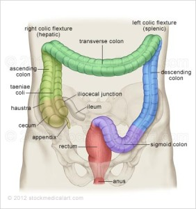 colon-anatomy