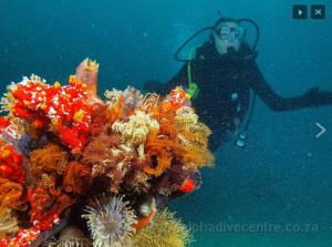 Tipiese Wes-Kaapse koraalrif