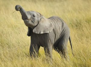 rs_560x415-140408154504-1024.baby-elephant-grass.ls.4814