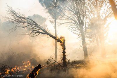 Kaapse brande in beeld