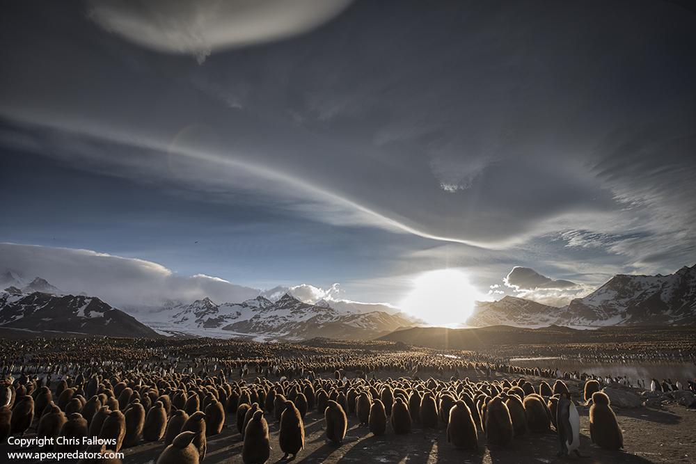 Ons oseane en seelewe is onder druk: verstommende foto's