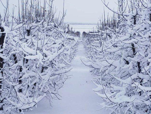 Sneeuval