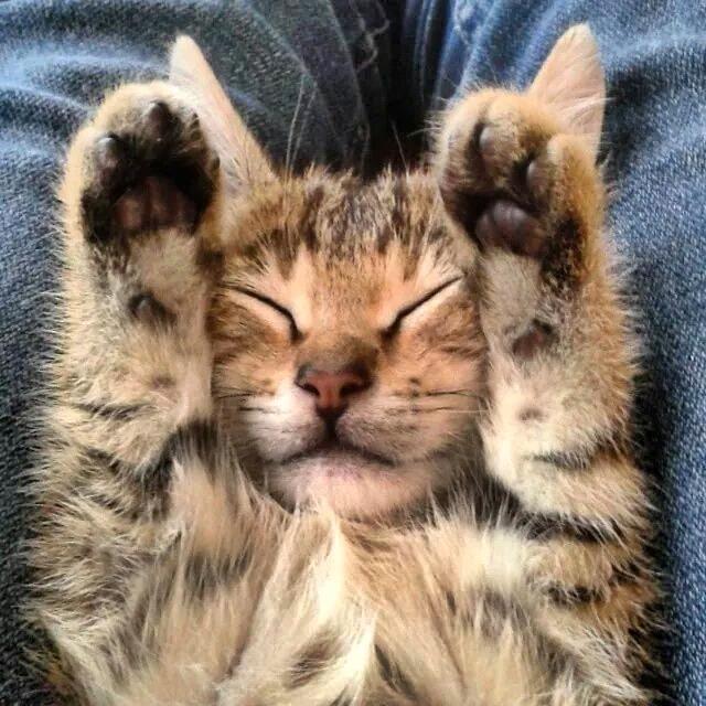 Spin 'n kat nét van lekkerkry?