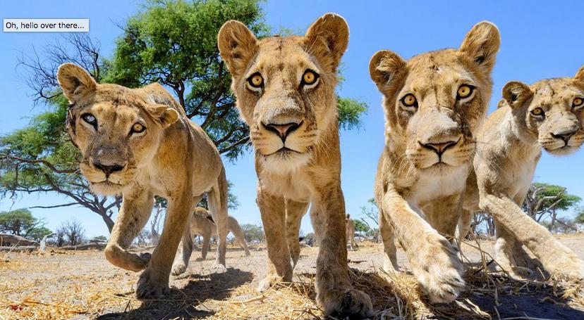 Dramatiese dierefoto's en hoe hulle geneem is