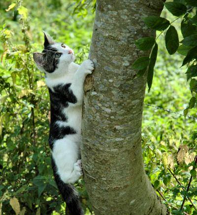 Katte: maklik boom-op, moeilik af?