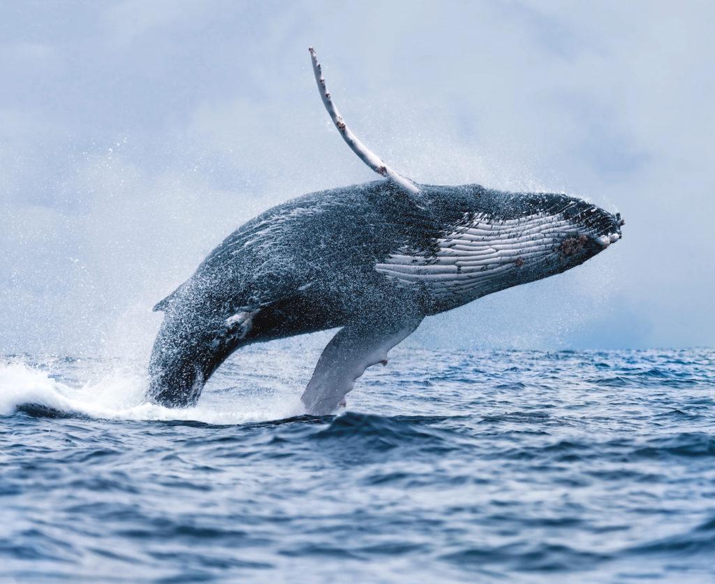 Watter 3 diersoorte sal binne eeu uitsterf?