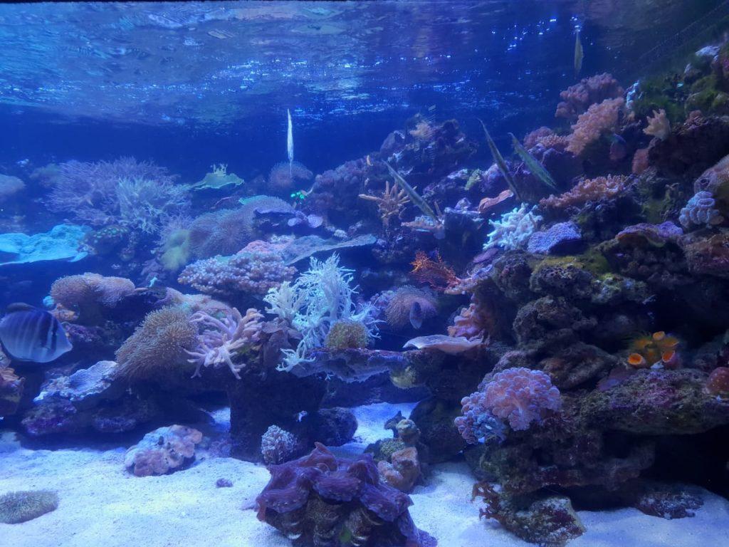 Sonskerm beskadig koraal
