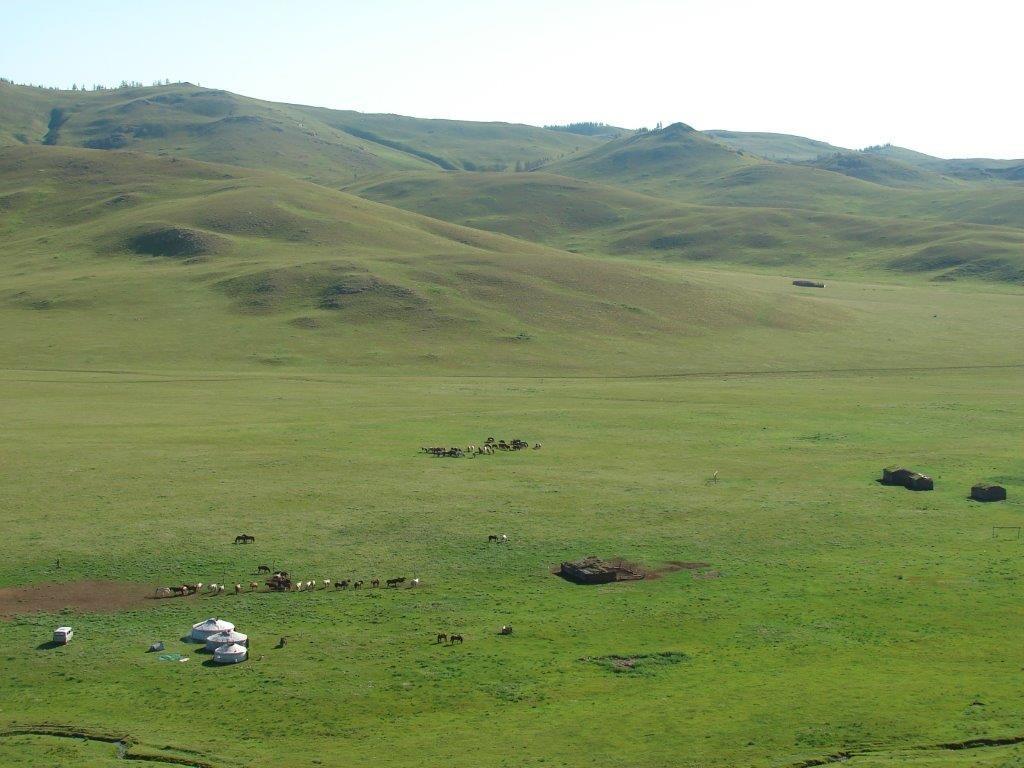 Langste perde-uithourit is in Mongolië