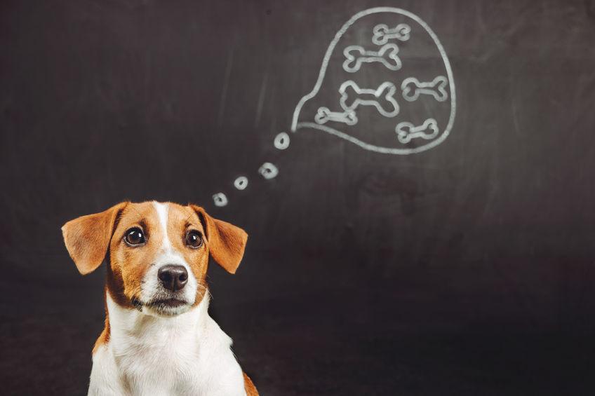 Wat kan honde en katte eet?