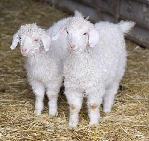 SA se wol- en sybokprodukte steeds gesog