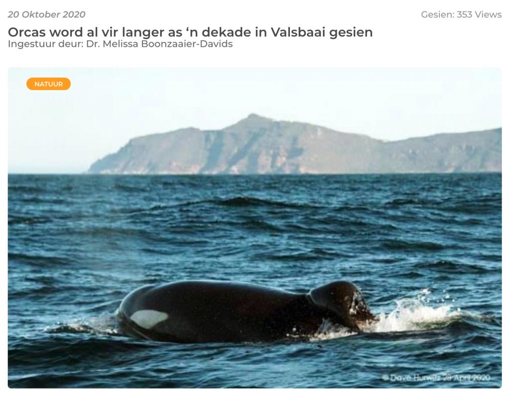 Hoe jag walvisse soos Orcas in Valsbaai?