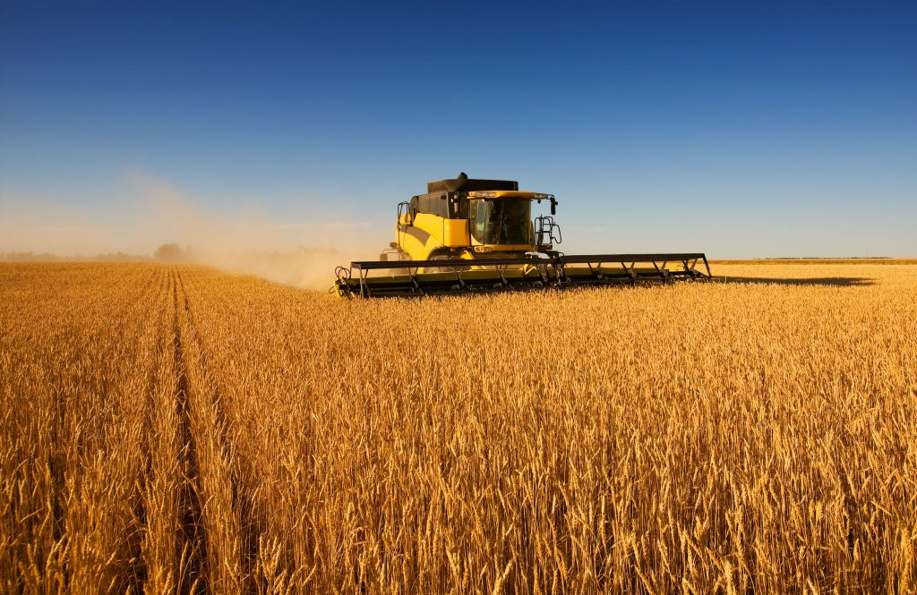 Landbou: Diere-veilings, somergraan-aanplantings en aanlyn-wynverkope